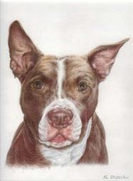 Tyson the Dog